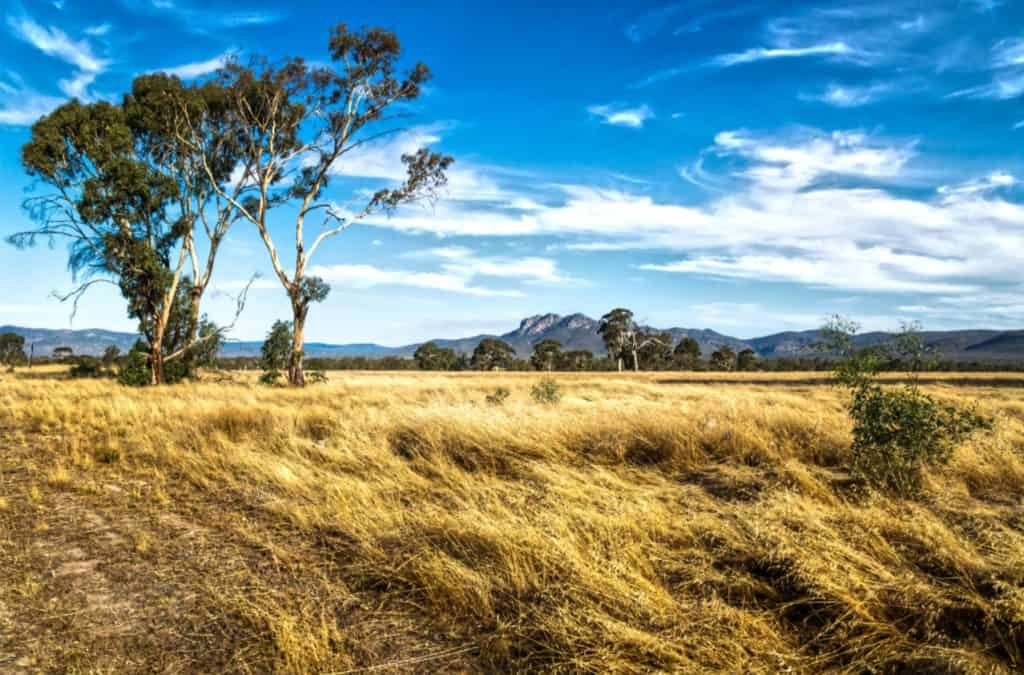 14   Grassland landscape in the bush with Grampians mountains in the background. Victoria